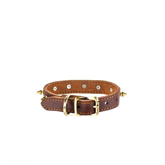 Red Oak Gladiator Leather Collar Bacck