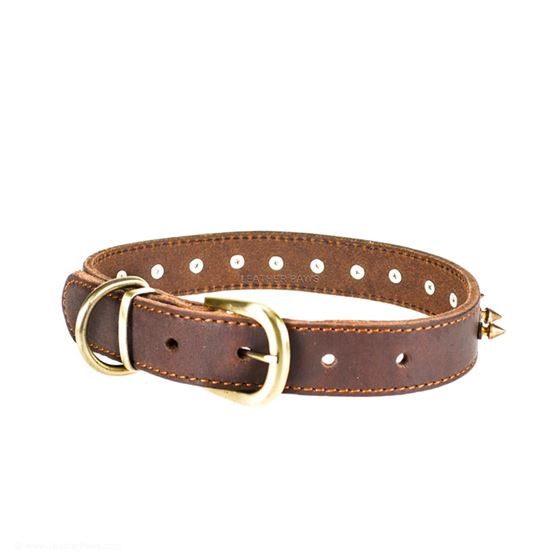 Red Oak Gladiator Leather Collar Clasp